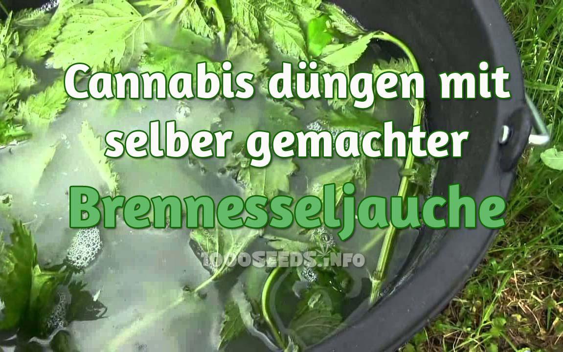 brennesseljauche ein ausgezeichneter naturd nger auch f r cannabispflanzen 1000seeds. Black Bedroom Furniture Sets. Home Design Ideas