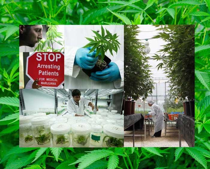 medical-marijuana-news Juni 2014