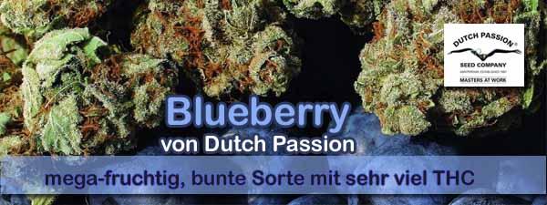 Blueberry Seeds kaufen von Dutch Passion