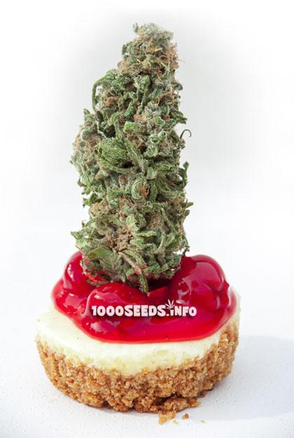 backen mit Cannabis, Cannabiis-Rezepte