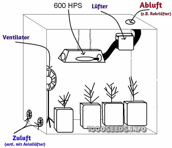 Growroom Aufbau