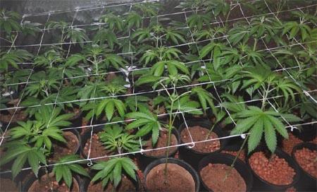 Cooco Hydro Grow