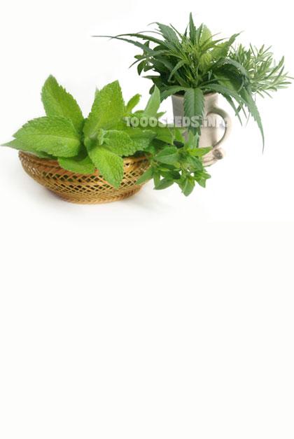 Weedkoch, kochen mit Cannabis, Cannabis-Rezepte