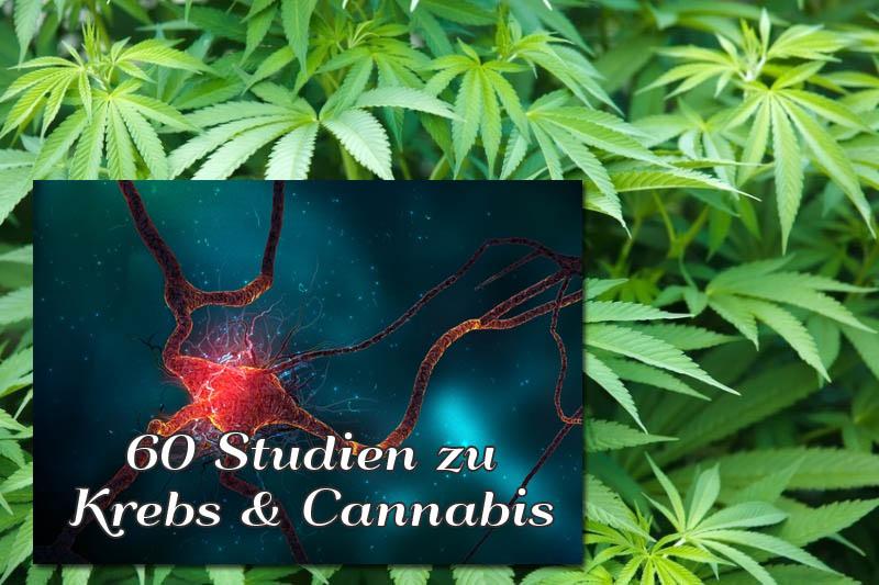 60 studien die die wirksamkeit von cannabis bei der. Black Bedroom Furniture Sets. Home Design Ideas
