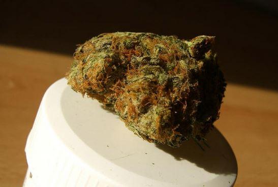 Medical Grapefruit, Bud