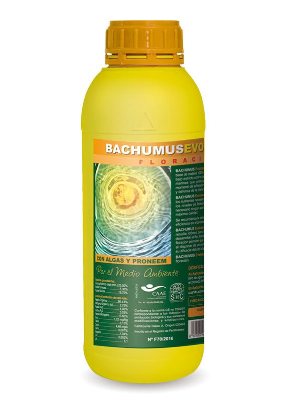 Bachumus-Evolution-Trabe