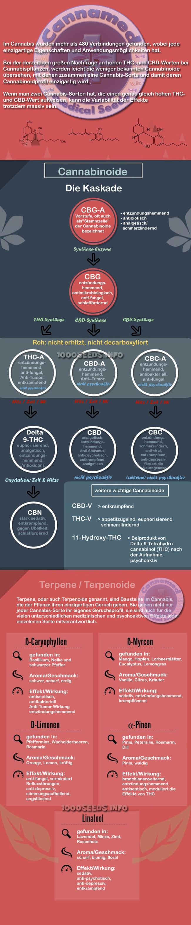 Cannabinoid-Kaskade