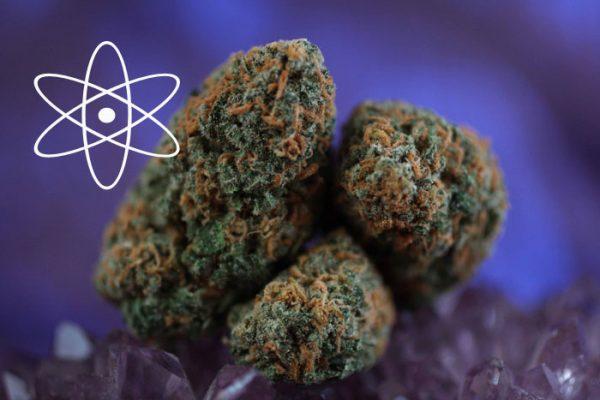 Cannabinoid-Kaskade, Cannabinoide und Cannabis