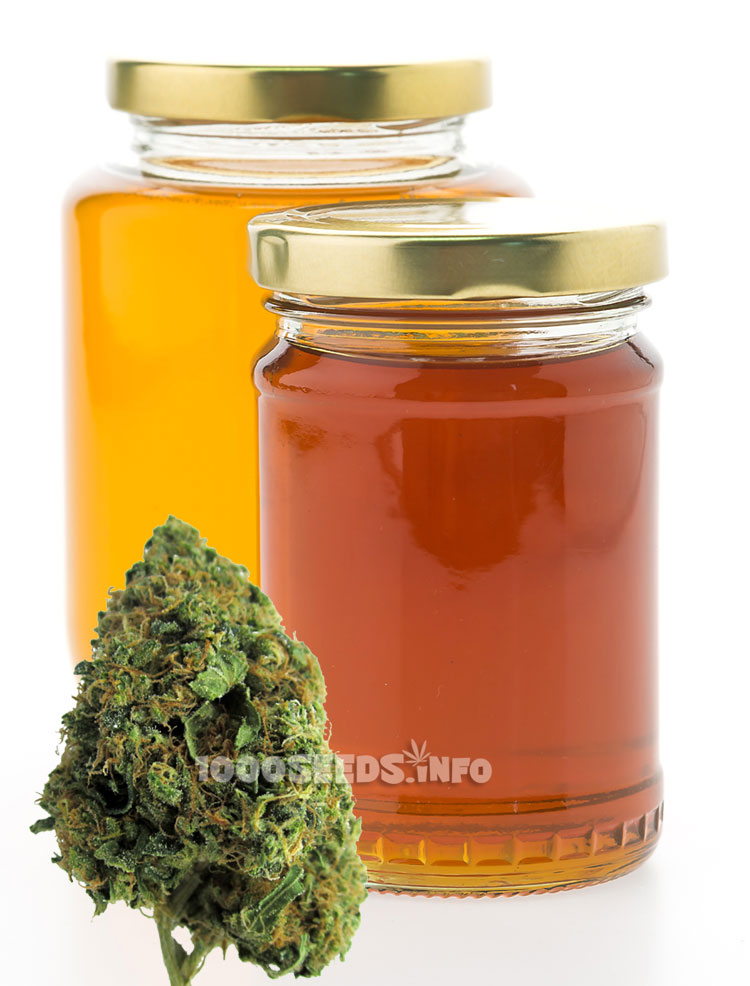 Cannabis-Honig selber machen, Cannabis-Rezepte, Weed-Koch