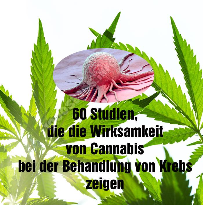 Cannabis-und-Krebs, wirksamkeit von Cannabis bei Krebs, cannabis und Krebs Studien