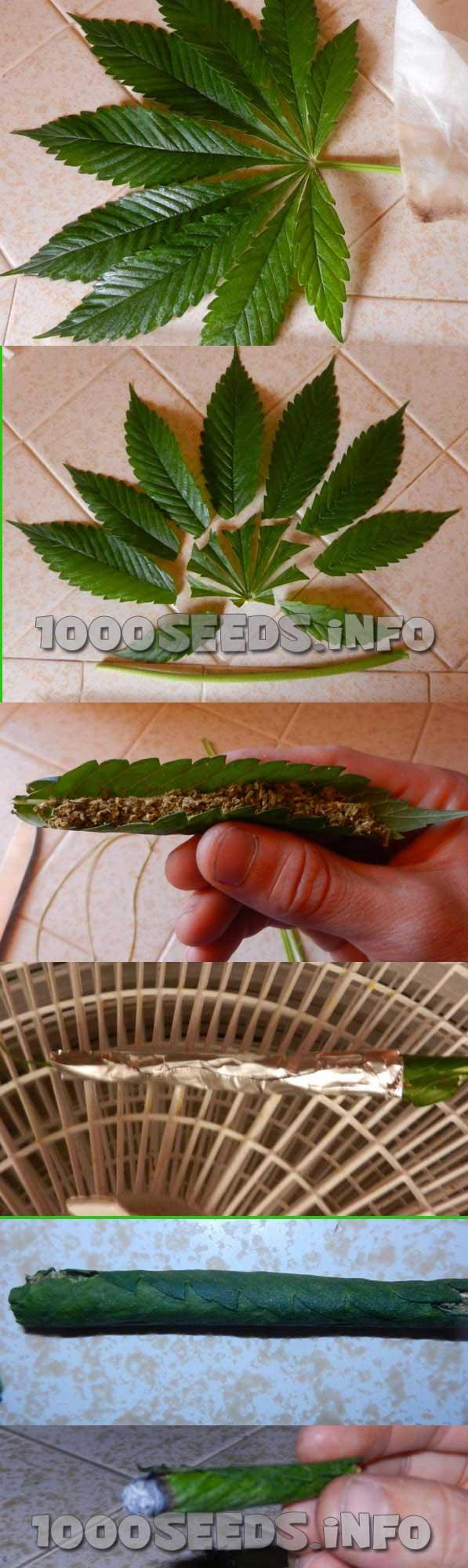 Cannabisblatt-zum-Rollen, mit Cannabisblatt joint rollen