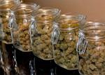 Welcher-Cannabisstrain-pass