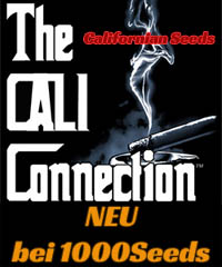 The Cali Connection, Californian Seedbank
