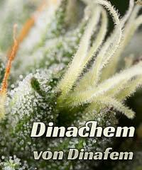 Dinachem von Dinafem kaufen