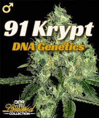 91 Krypt (DNA Genetics)