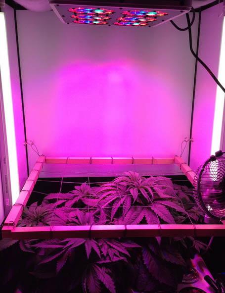 LEDs auf kleinem Raum, Cannabis anbauen