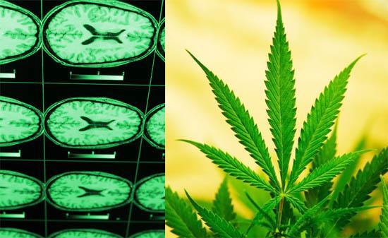 Schädel-Hirn-Trauma und THC