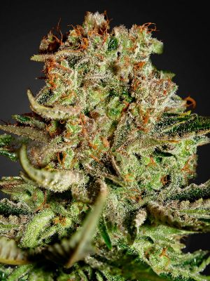 Super-Bud Greenhouse