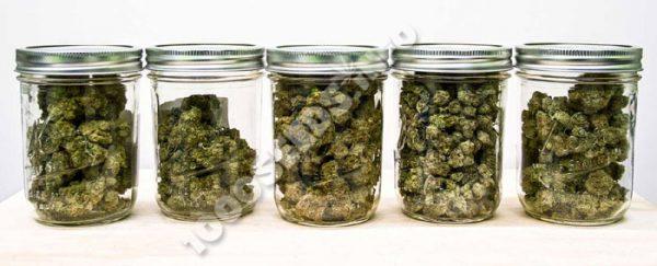 News Cannabis, Medical Marijuana News Oktober September