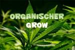 organic Grow Cannabis, Organischer Anbau Cannabis