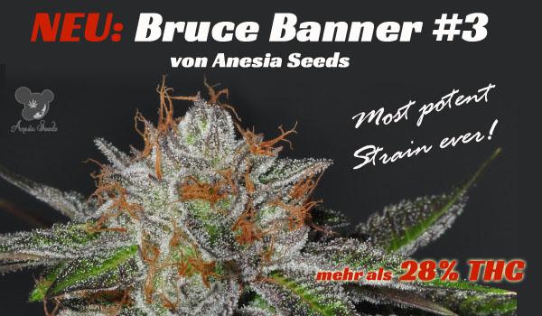 Bruce Banner #3 die stärkste Sorte der Welt
