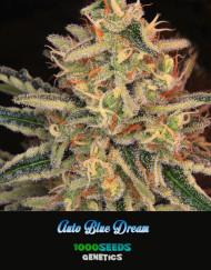Auto-Blue-Dream, feminisierte Samen