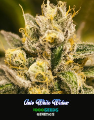 Whie Widow Auto, 1000Seeds Genetics