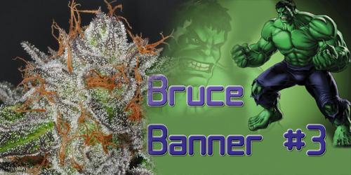 Bruce-Banner-3
