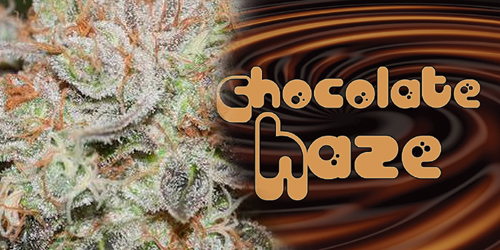 Chocolate-Haze