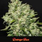Destroyer-Haze, Premium Haze, Seedshop