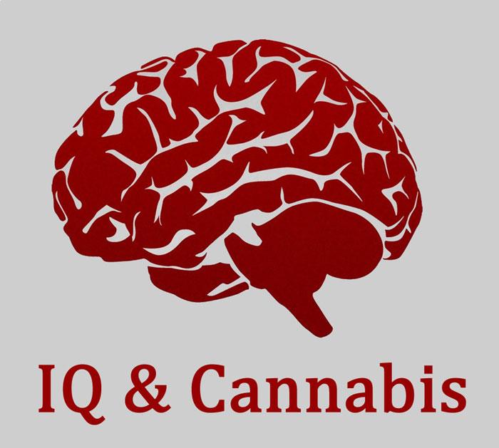 IQ und Cannabis, Studie zu IQ und Marijuanakonsu, Cannabis-Blog, Grow-Infos