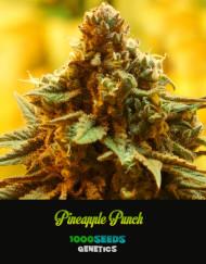Pineapple-Punch, feminisierte Samen kaufen, Seedshop