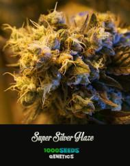 Super-Silver-Haze, feminisierte Samen, 1000Seeds Genetics