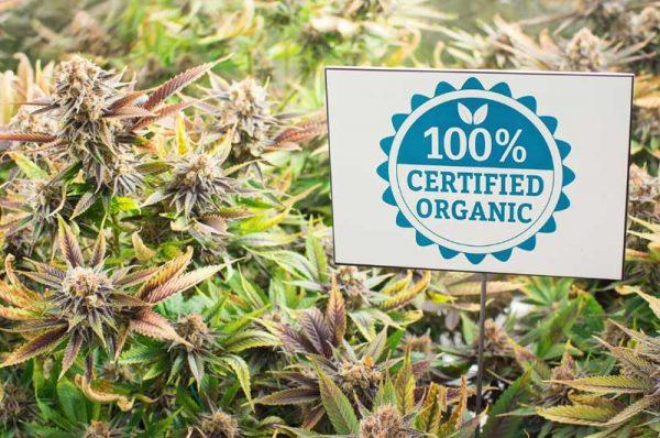 organischer Grow, Cannabis aanbauen, Grow-Tipps, Grow-Lexikon