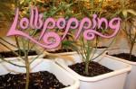Lollipopping