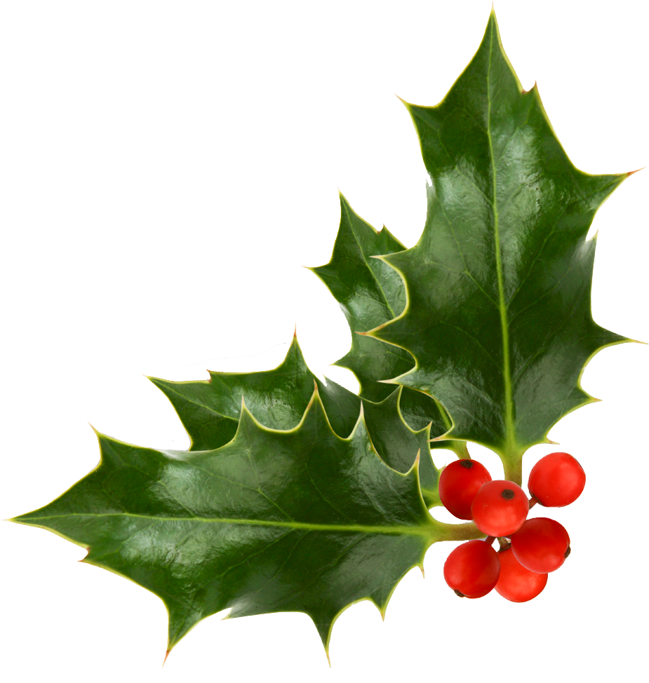 Christmas-Holly-Pictures-1-1