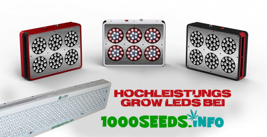 LED beim Grow