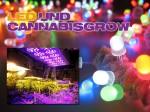 LED beim Cannabisgrow