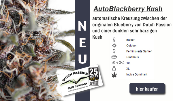 Auto Blackberry Kush von Dutch Passion