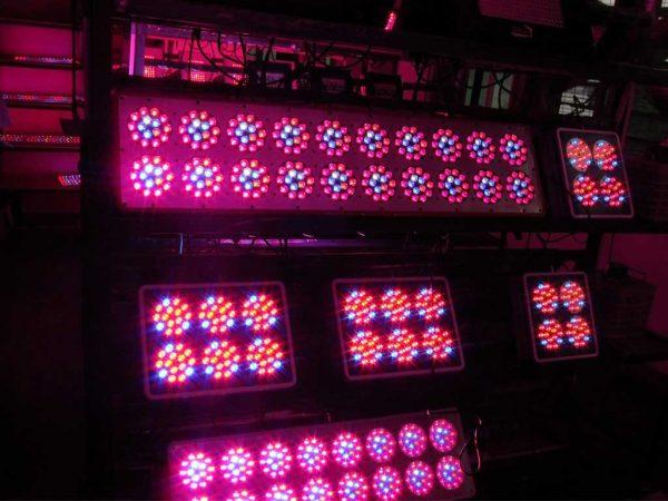 LEDs für den Cannabisanbau kaufen, die besten LEDs am Markt Orion LED