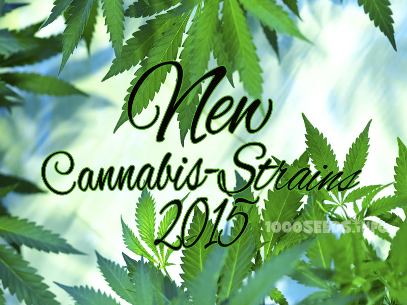Neue Cannabis Strains 2015 - 1000Seeds
