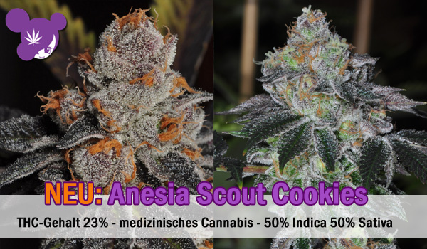 anesia scout cookies2