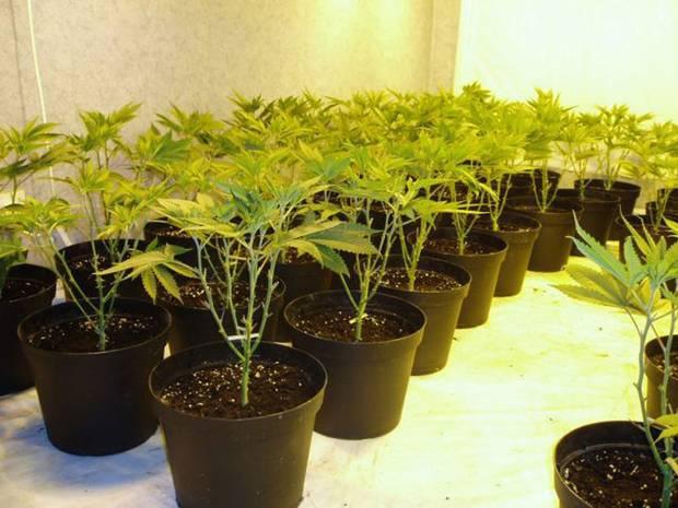 Perpetual-Grow, kontinuierlicher Anbau
