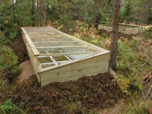 Frühbeet Cannabispflanzen, Outdoor-Grow