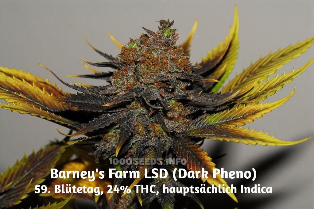LSD (Barney's Farm), 5 feminisierte Samen