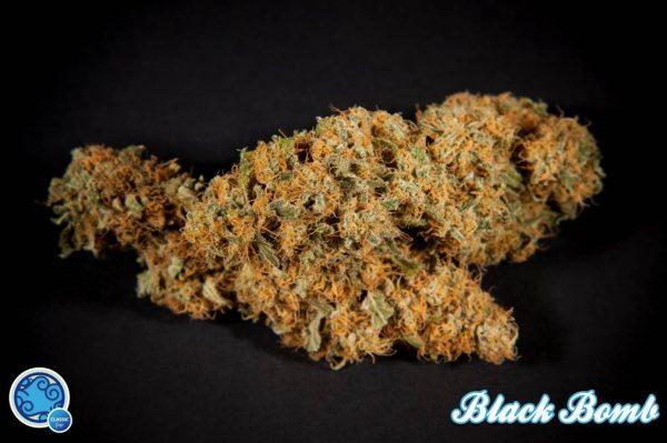 Black Bomb von Philosopher Seeds: 3, 5 und 25 feminisierte Samen