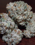Buddha Tahoe OG Kush (The Cali Connection), 10 regular Seeds