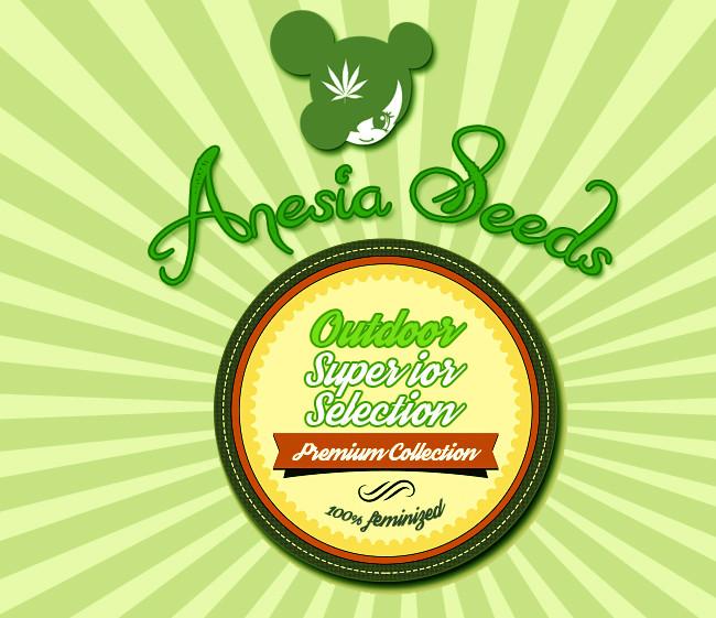 Outdoor Superior Selection (Anesia Seeds), 15 feminisierte Samen