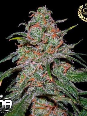 Lemon Skunk (DNA Genetics), 6 feminisierte Samen