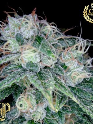 Sour Diesel (Reserva Privada), 13 regular Seeds